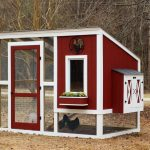 How To Make Your Own Chicken Coop DIY