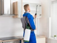Why you need Pest Control Services