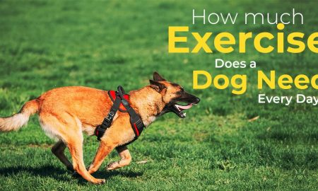 How Much Exercise Does A Dog Needs Every Day