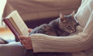 5 Tips to Keep Your Indoor Cat Happy