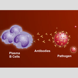 Antigen vs. pathogen - why one is good for your body, and one is NOT!